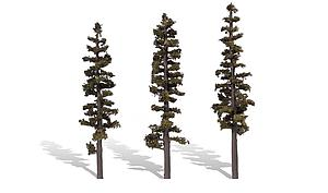 "Classic Trees - Standing Timber 7-8"" [3 Pack] (3563)"